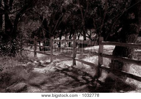 Carmel Valley 2