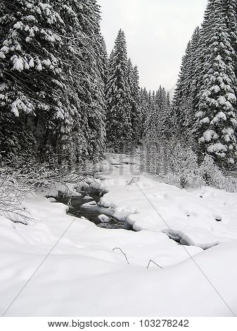 Snow-covered spruce forest,  source. Winter
