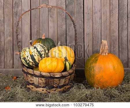 Pumpkin And Basket Of Gourds