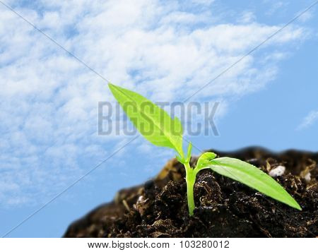 Green seedling growing from soil on blue sky background