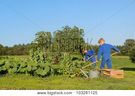 Farm boys working in the vegetable garden