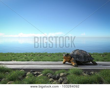 Railway track crossing rural landscape and turtle. Travel concept