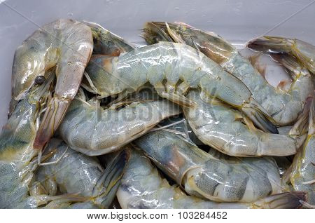 Fresh raw prawn, shrimp, seafood
