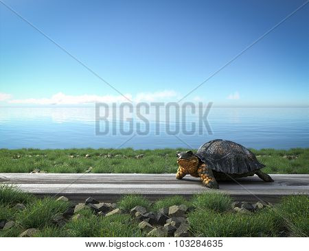 Small green turtle on the beach. Tourism concept background