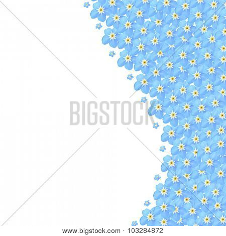Forget-me-not flowers, isolated on white