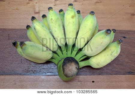 Bunch of cultivated, sugar banana