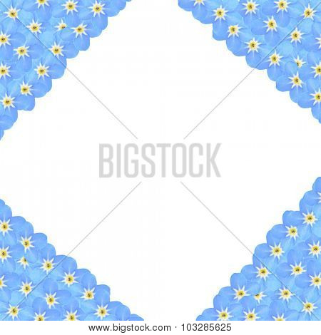 Frame of Forget-me-not flowers, isolated on white