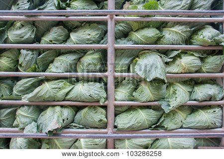 Cabbage In Steel Cage