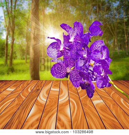 Violet Orchid Flower On Wood Plank With Colorful Blur Nature Background