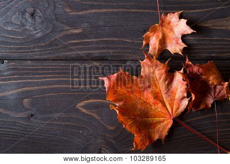 Autumn leaves on dark wooden background