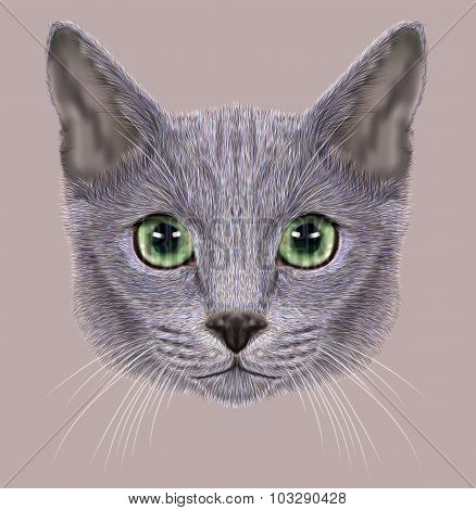 Illustration of Portrait of Russian Blue Cat