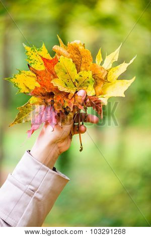 Woman in Autumn or fall with colorful leaves