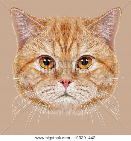 Illustration of Portrait British short hair Cat