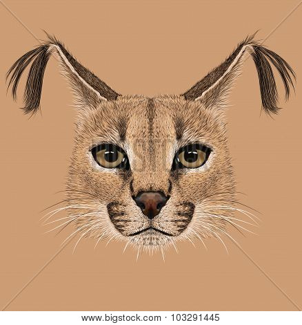 Illustration of Caracal cat