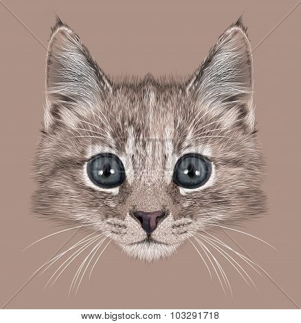 Illustration Portrait of Domestic kitten