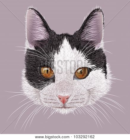Illustration Portrait of Domestic cat