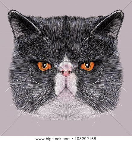 Illustration Portrait of Exotic Short hair cat