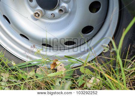 Wheel Car Among Green Grass