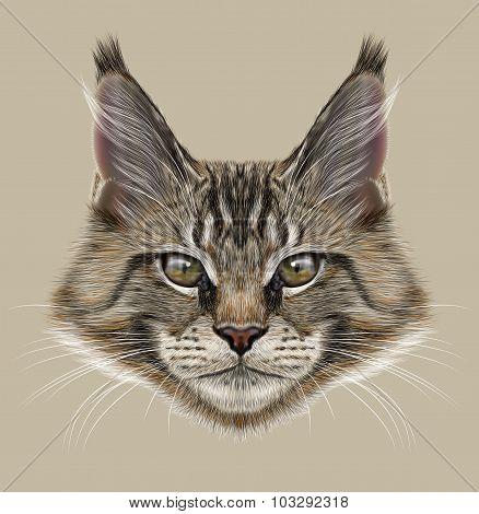 Illustration Portrait of Maine Coon Cat