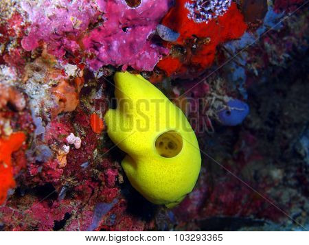 Demosponge, Island Bali, Pemuteran