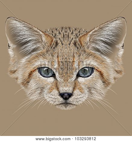 Illustrative Portrait of Sand Dune Cat