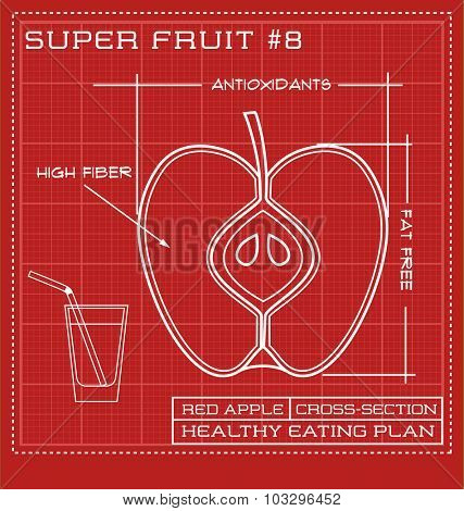Blueprint diagram line drawing of fruit. Infographic of an apple cross-section