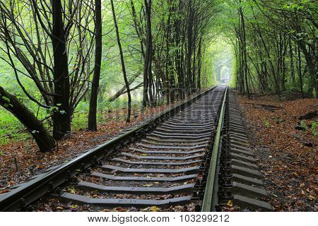Railway in wet autumn forest