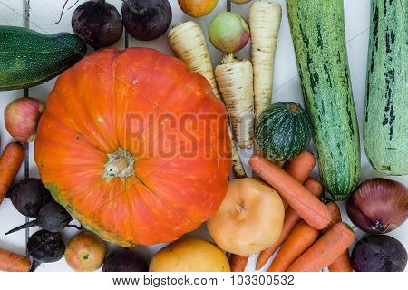 Fresh autumn vegetables