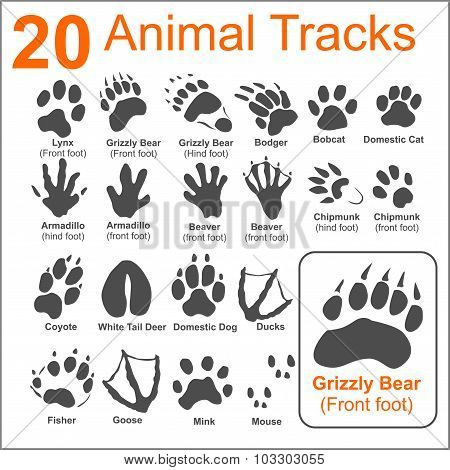 Animals Tracks - vector set