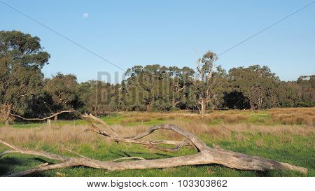 Moon over a fallen tree at a vacated farmland paddock
