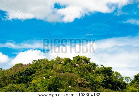 Green Tree Land With Clear Blue Sky On Day Noon Light