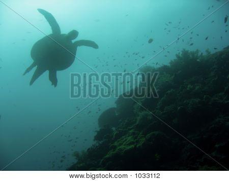Sipadan Diver