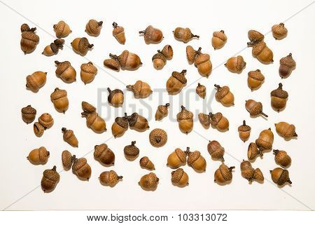 Many Acorns With Hats On Over White