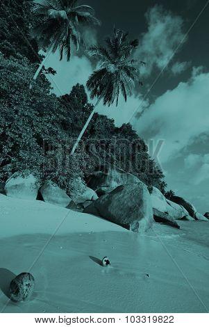 Malaysian Beach Coconut Palm Tree Travel Vacation Concept