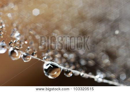 Droplets on spider web close up