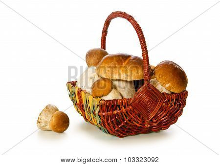 Basket full of  porcini mushrooms isolated.