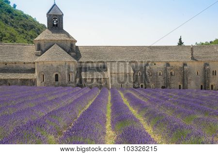Abbey of Senanque and lavender flowers.