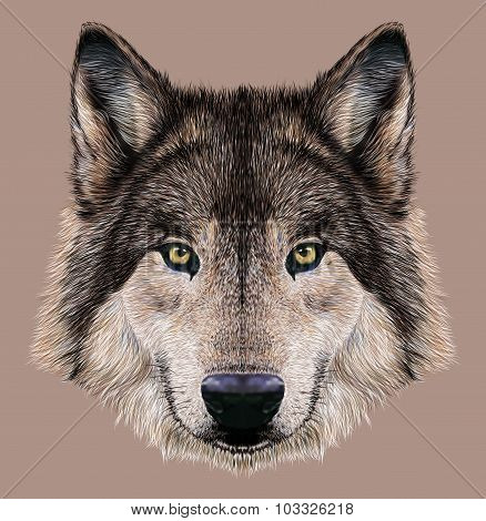 Illustration Portrait of a Wolf