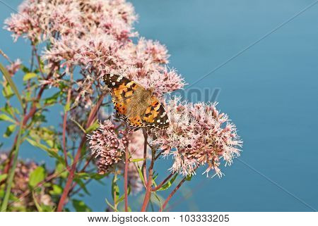 Butterfly On A Water Plant