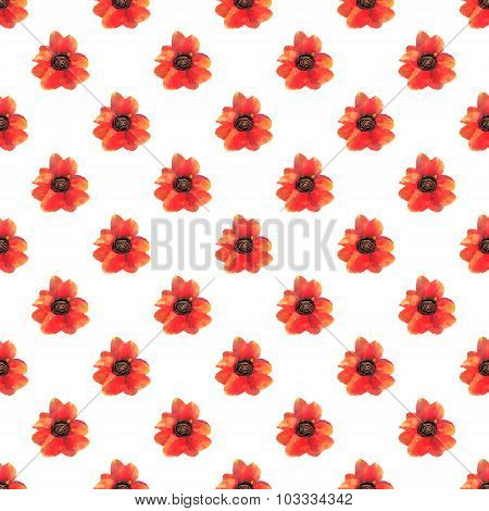 Seamless Pattern With Red Poppy Flowers On White Background.