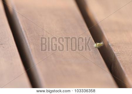 Caterpillar On Park Bench