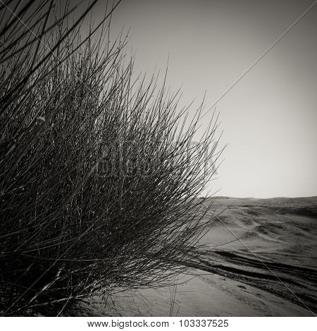 Close up of tall grass plant. Nature background. Black and white image.