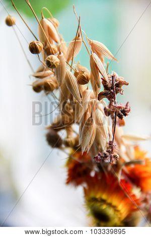 Bouquet of cereals