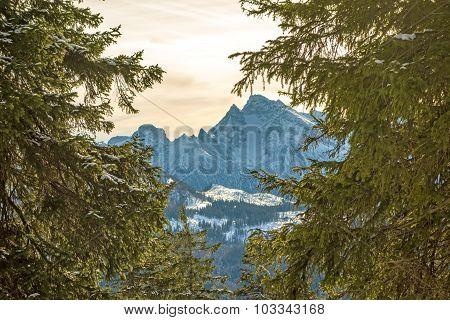 Mountain Peak Through Trees