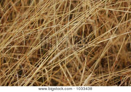 Dried Weeds In The Garden