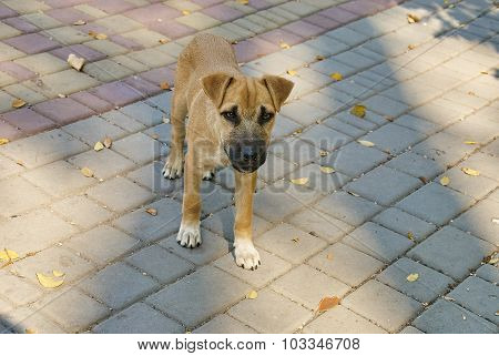 Portrait Of A Stray Dog Outdoors
