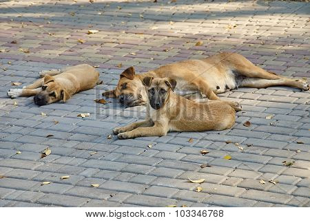 Portrait Of A Stray Dogs Outdoors