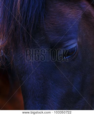 Closeup of a  black horse eye