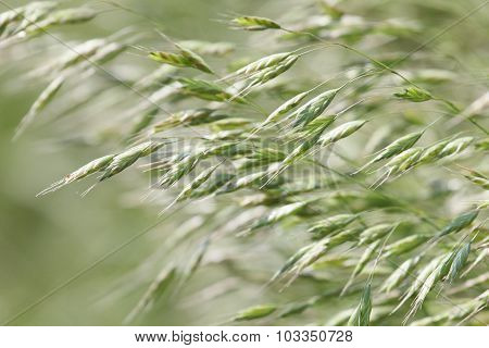 Windy Weeds