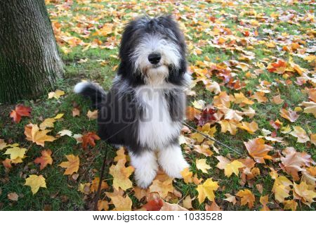 Autumnpuppy